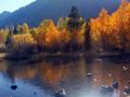Aspens near Silver Lake